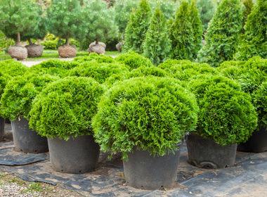 Högg Anlagenbau, Gartenbau und Landschaftsbau - Pflanzenverkauf